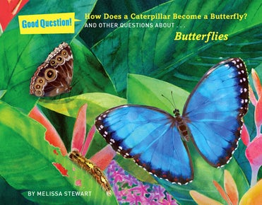 How Does a Caterpillar Become a Butterfly?