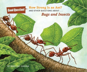 How Strong Is an Ant?