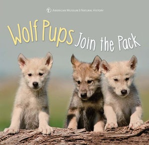 Wolf Pups Join the Pack