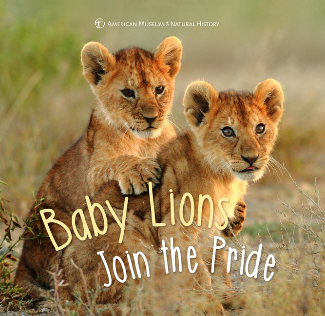 Baby Lions Join the Pride