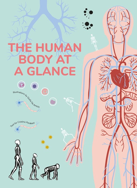 The Human Body at a Glance